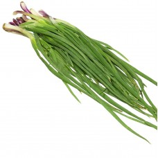Leaves Spring Onion